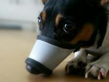 Focinheira para Cães e Felinos - Design Exclusivo Pet Bed -  Não encosta nos olhos !
